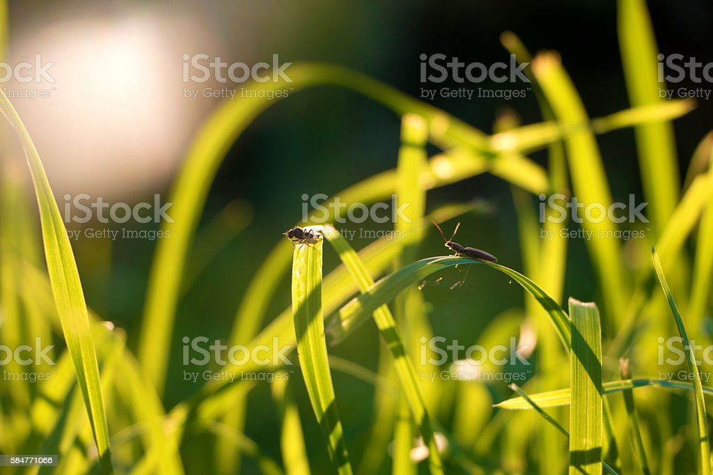 Worms on grass leaf stock photo
