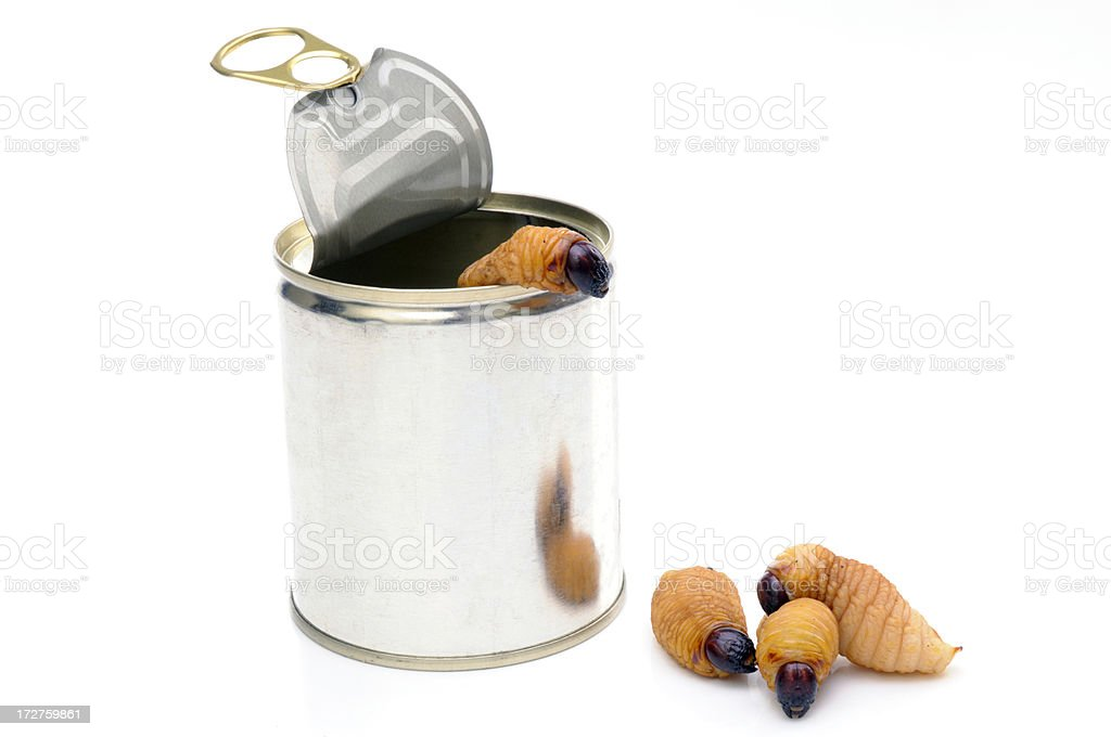 Worms out of a tin can stock photo