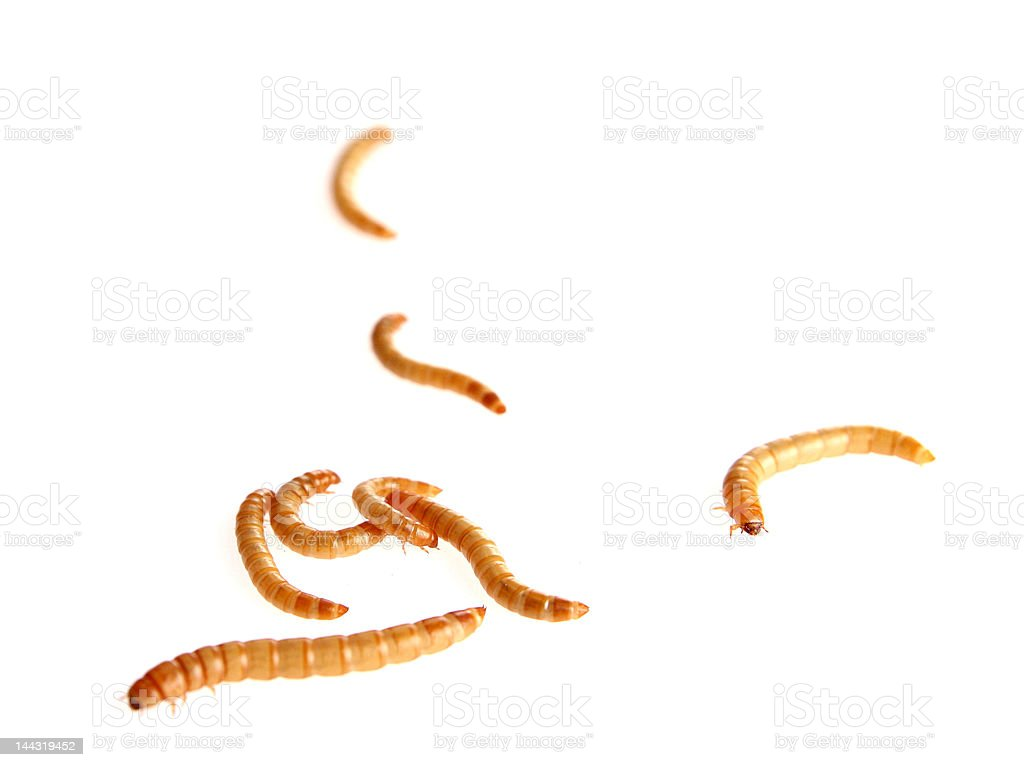 Worms royalty-free stock photo