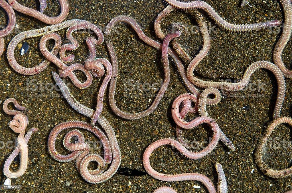 worms stock photo
