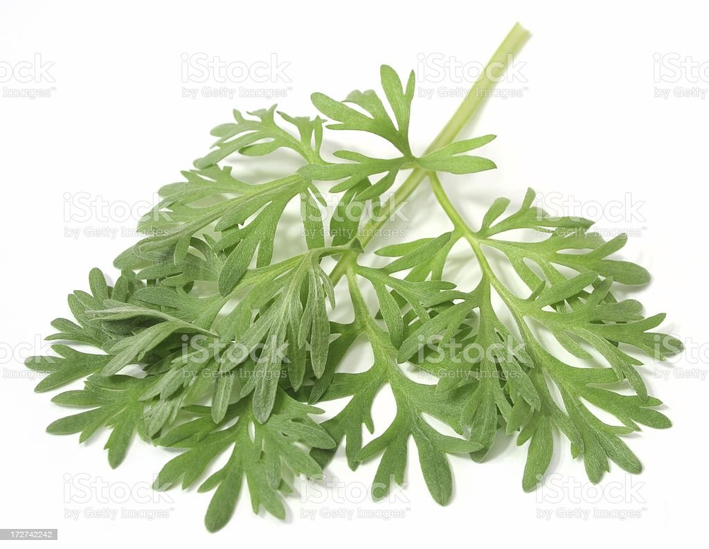 Wormwood royalty-free stock photo