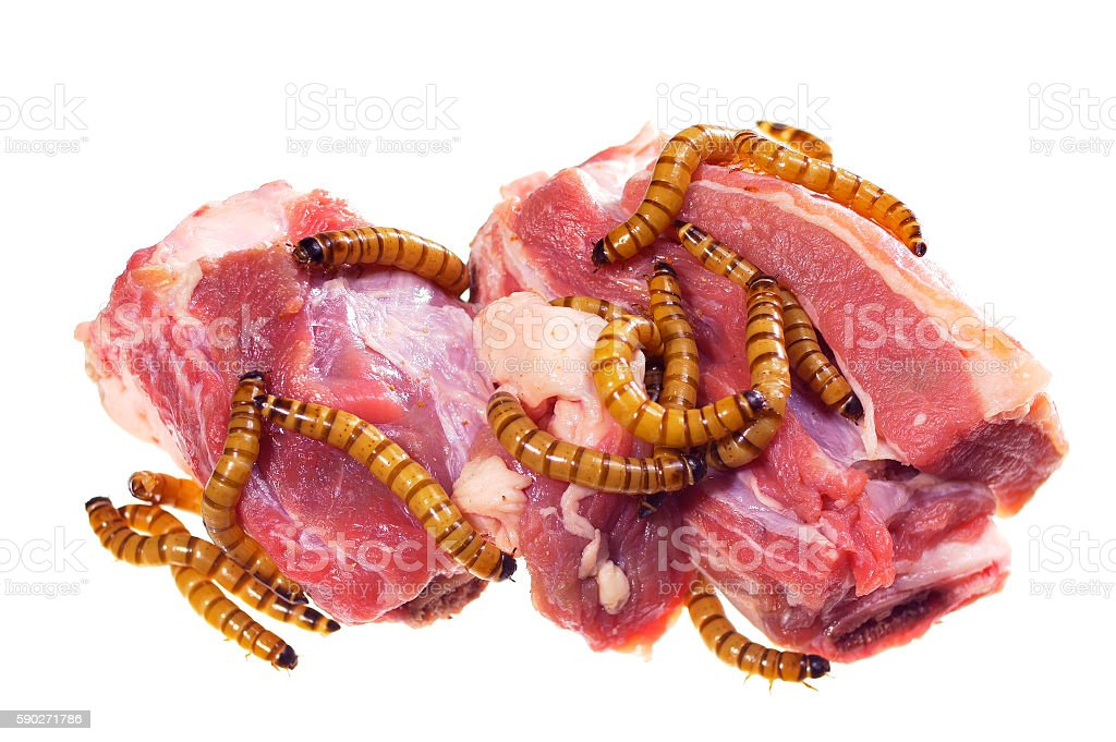 Wormy spoiled beef steak, ugly unhealthy food concept stock photo