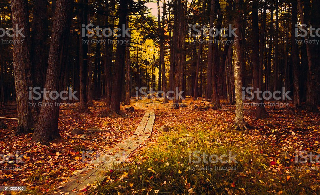 Would you walk with me to this spooky forest? stock photo
