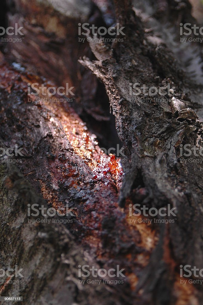 Wound of tree with Blood stock photo