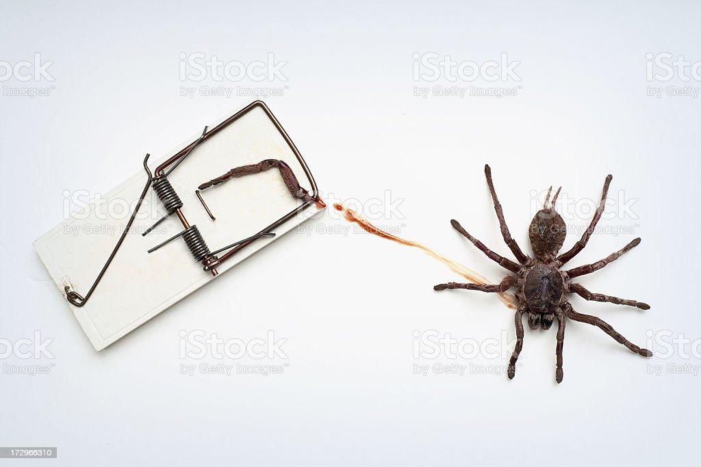 wound spider stock photo