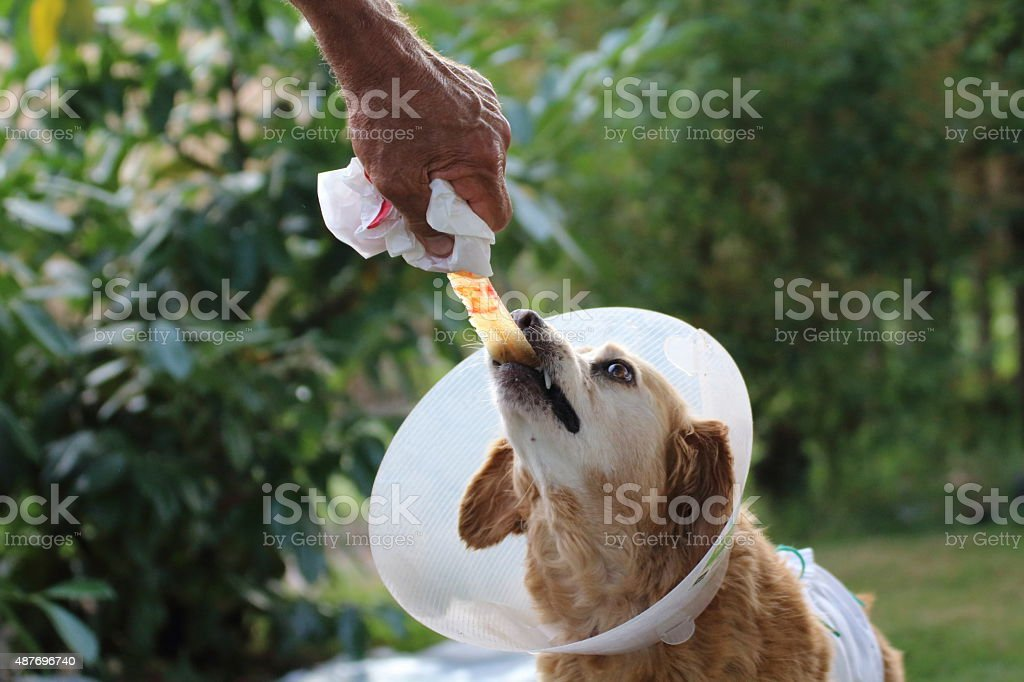 Wounded dog stock photo