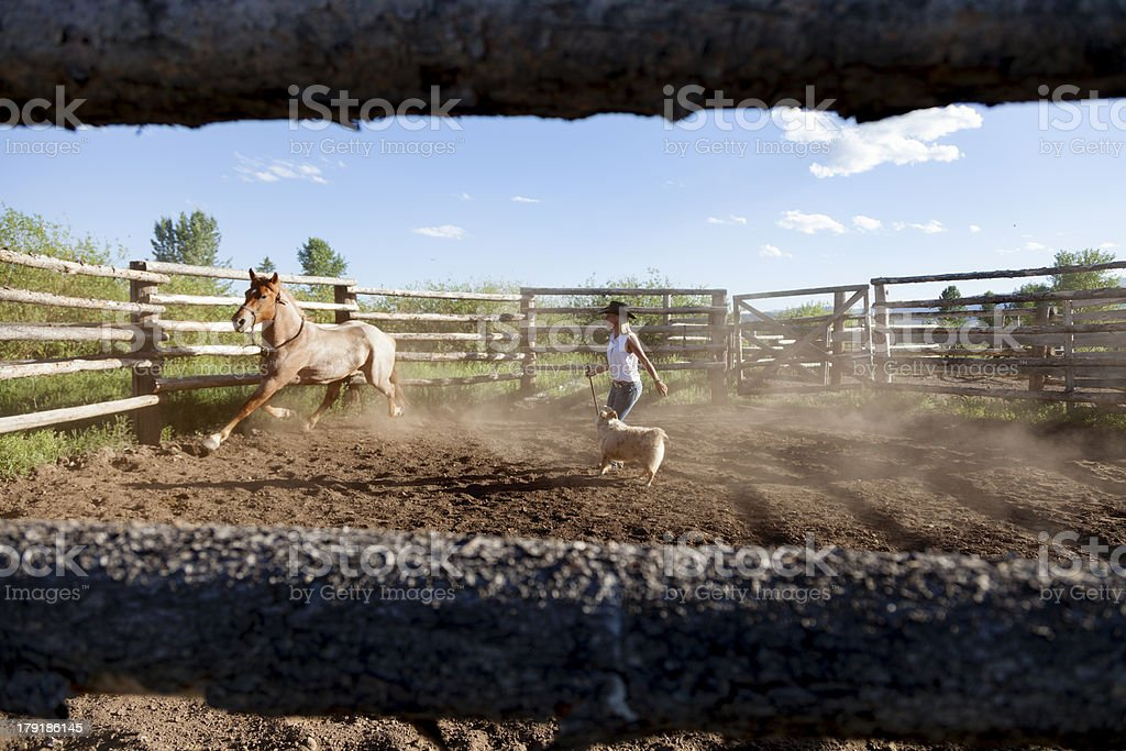 Wrangler Training a Horse stock photo