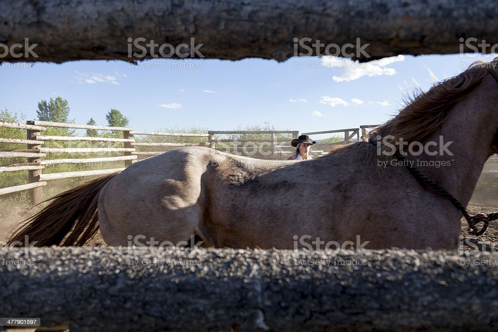 Wrangler Training a Horse royalty-free stock photo
