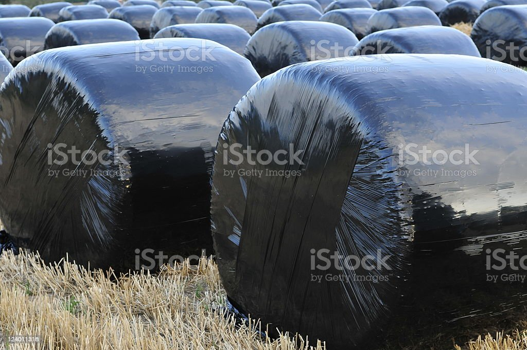 Wrapped hay bales,Jersey. royalty-free stock photo