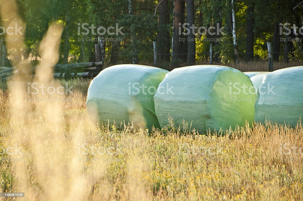 wrapped straw bales in late evening light stock photo
