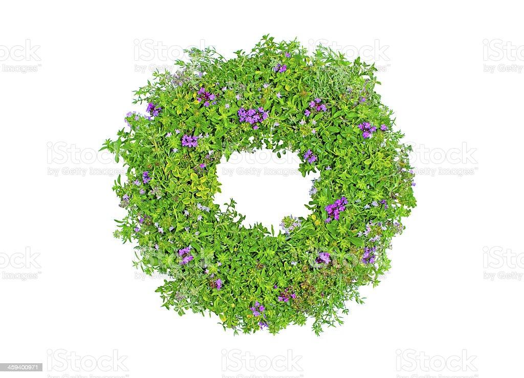 Couronne florale de thym photo libre de droits