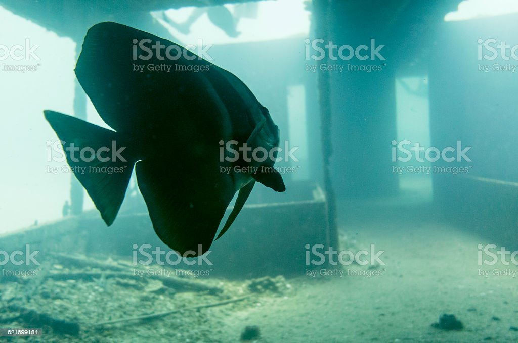 Wreck Diving in Thailand stock photo
