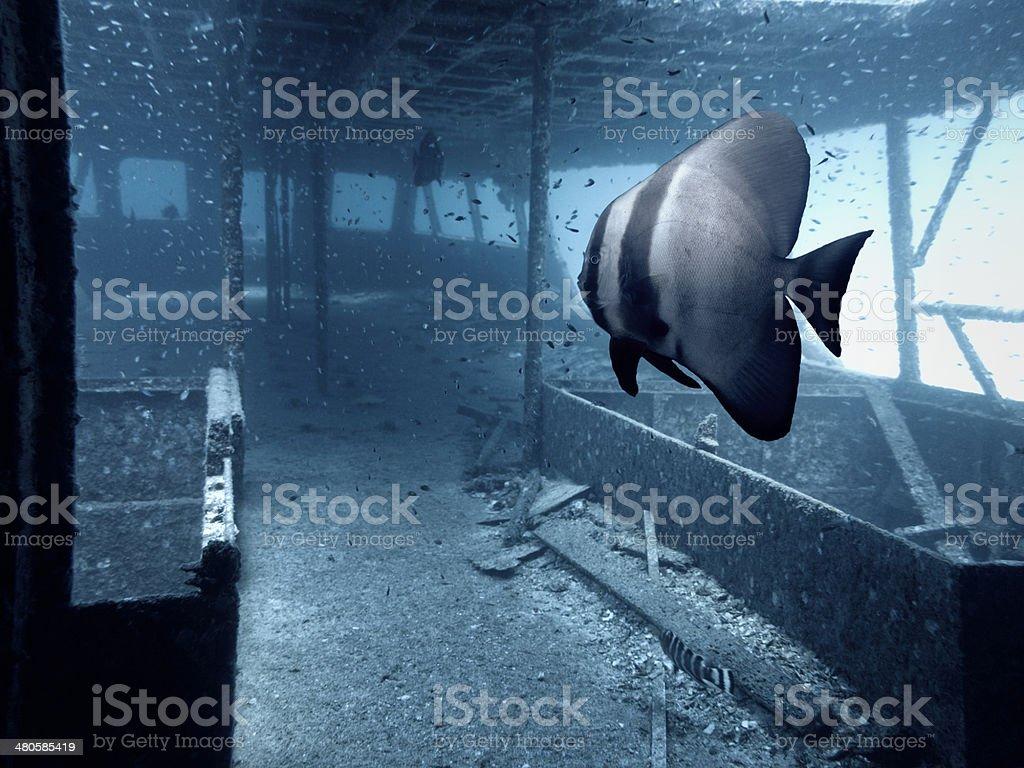 Wreck Under Andaman Sea royalty-free stock photo