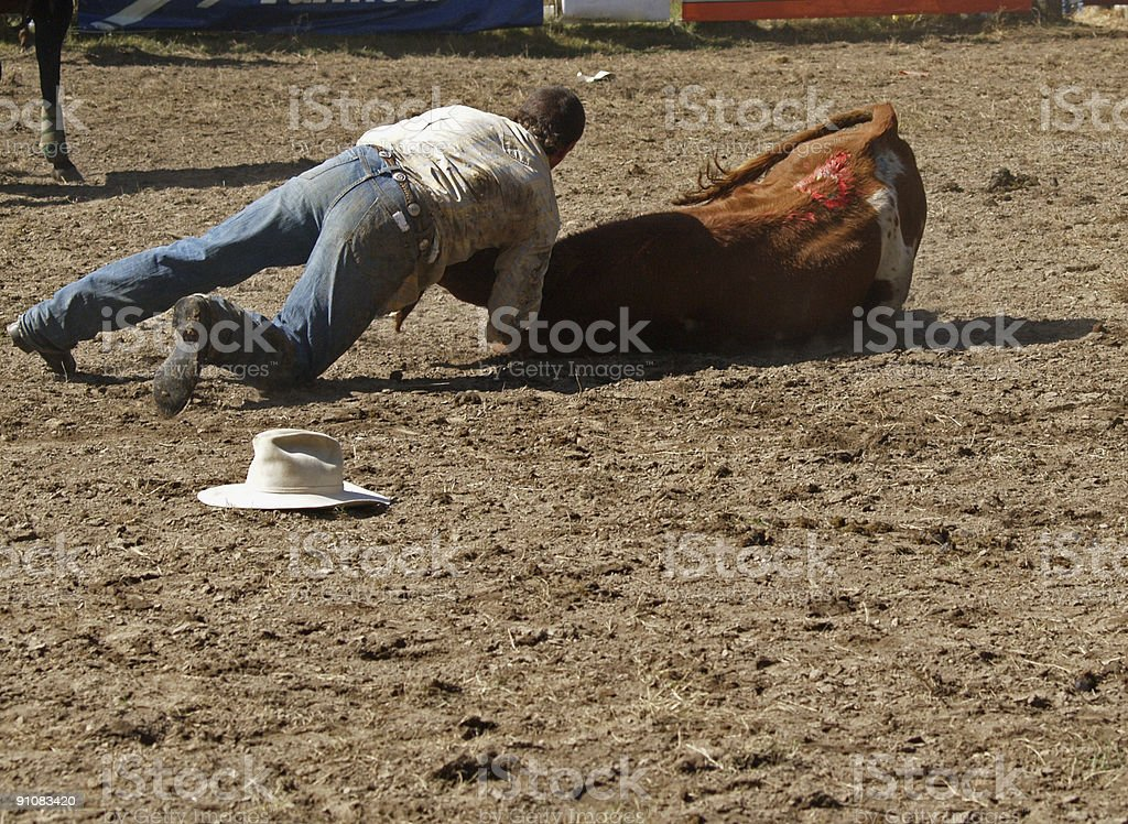 Wrestling A Steer stock photo