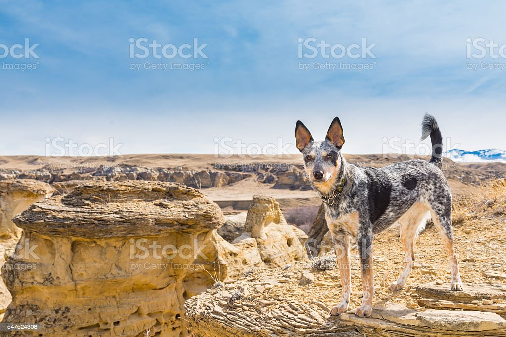 Writing on Stone stock photo