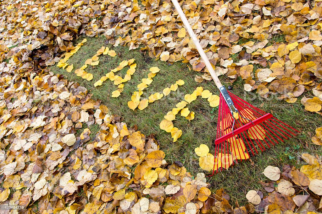 LEAVES written on a leaf covered yard royalty-free stock photo