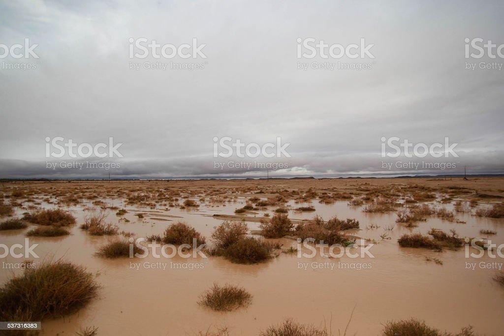 Wüste nach Regen foto stock royalty-free