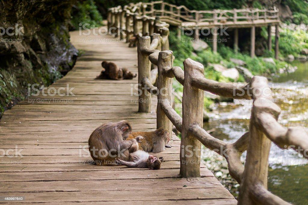 Wudangshan stock photo