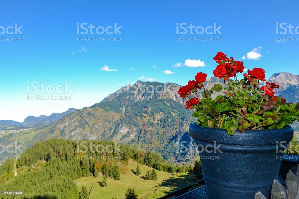 Wunderschöne Blume vor dem Tal stock photo