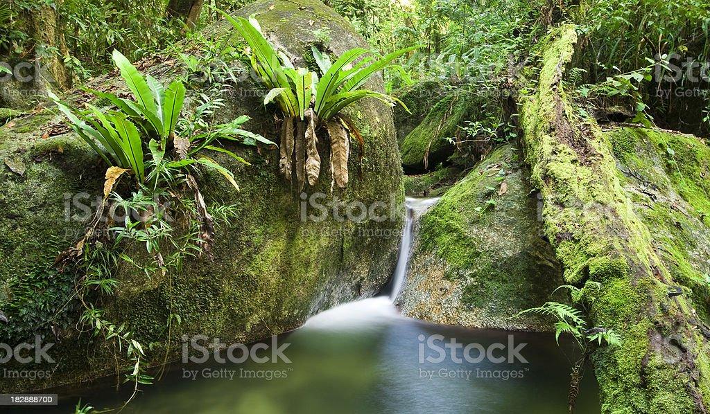 Wurrmbu Creek in Mossman Gorge stock photo