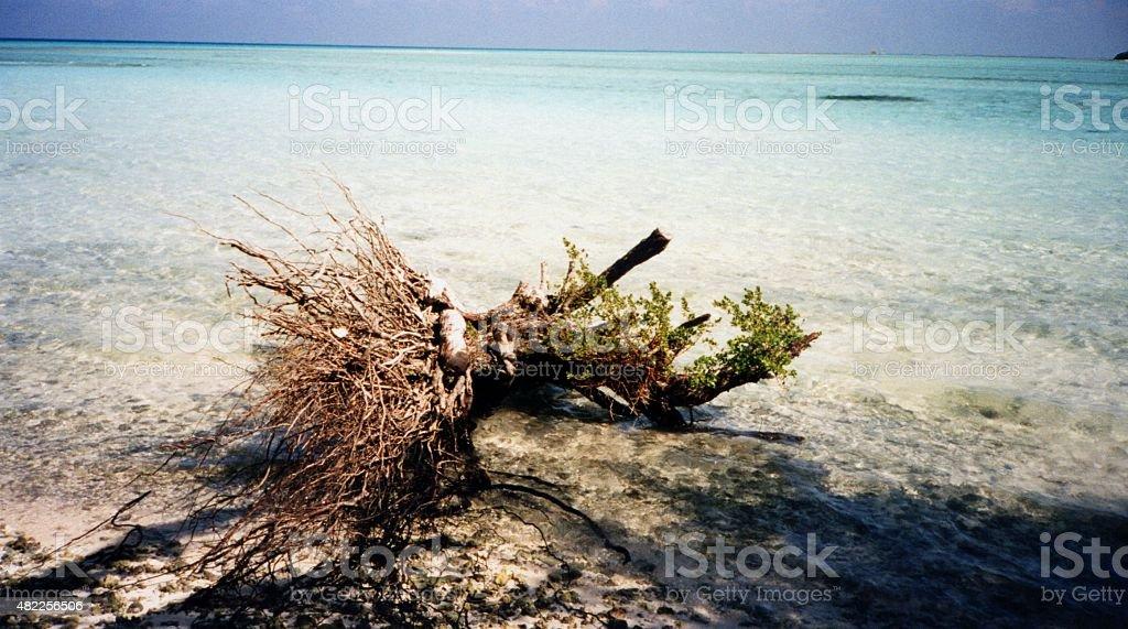 Wurzel am Strand stock photo