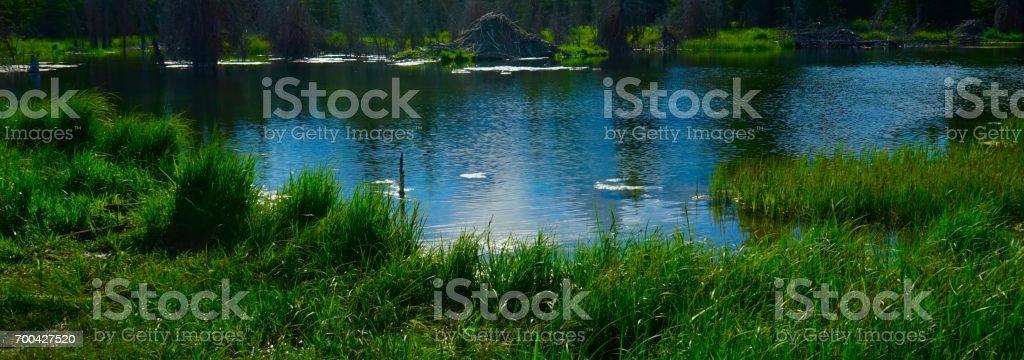 Wyoming Beaver Dam stock photo
