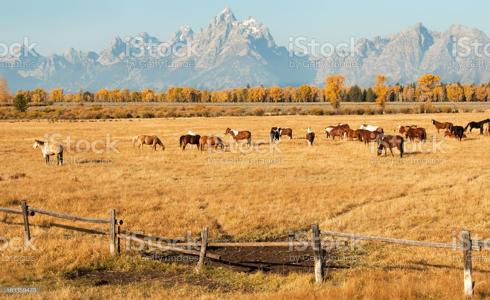 Wyoming Horse Ranch - Teton Range in the background royalty-free stock photo