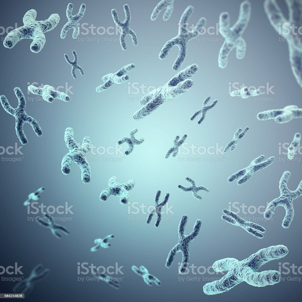 X-chromosomes on grey background, scientific and biology concept. 3d stock photo