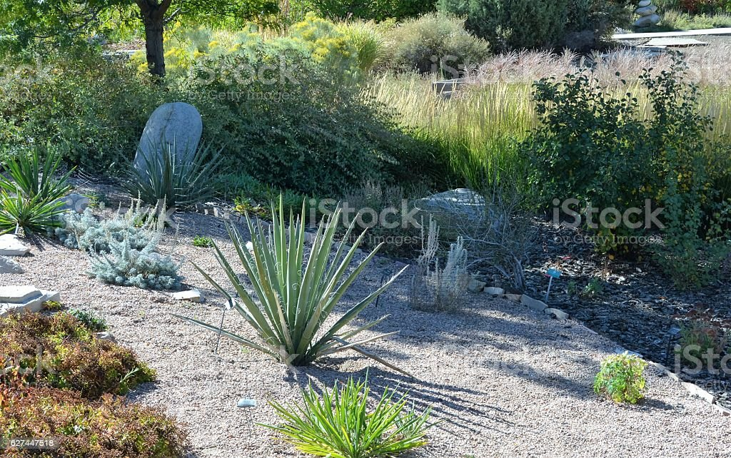 Xeriscaping stock photo