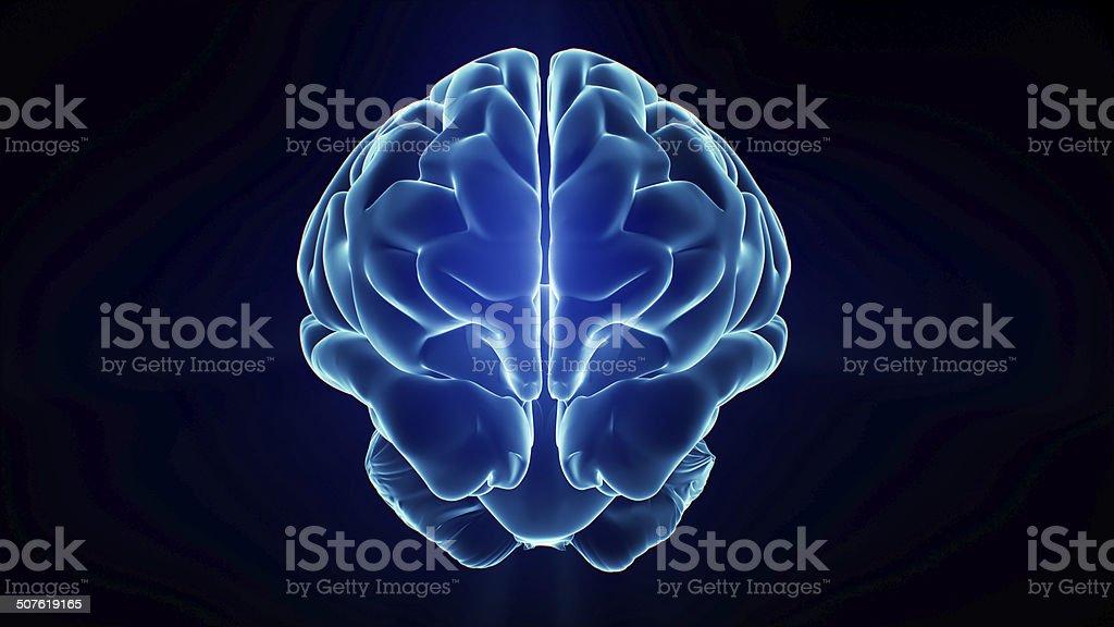 Xray Brain stock photo