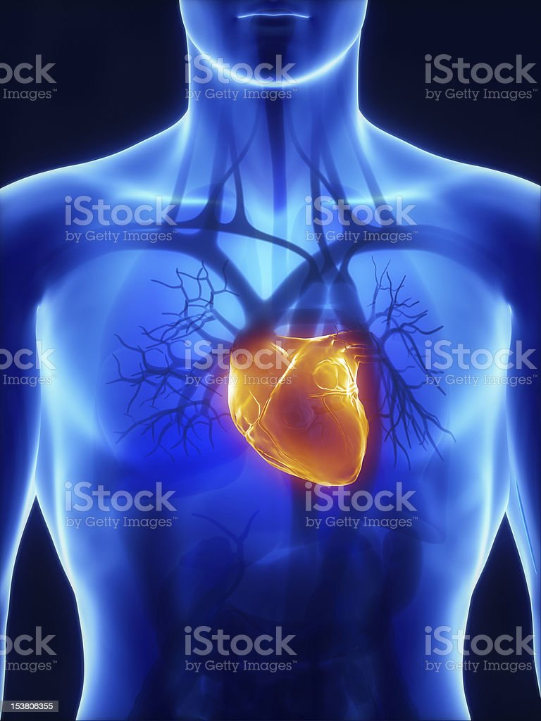 X-ray cardiovascular system in blue stock photo