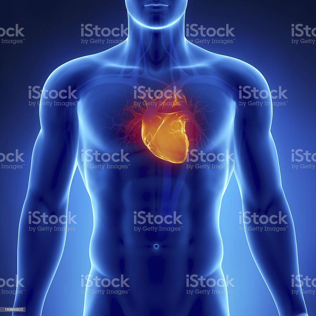 X-ray cardiovascular system stock photo