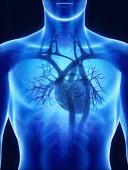 X-ray heart anatomy