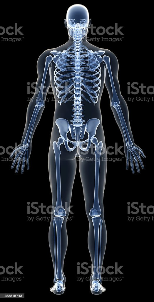X-ray human body of a man with skeleton for study stock photo