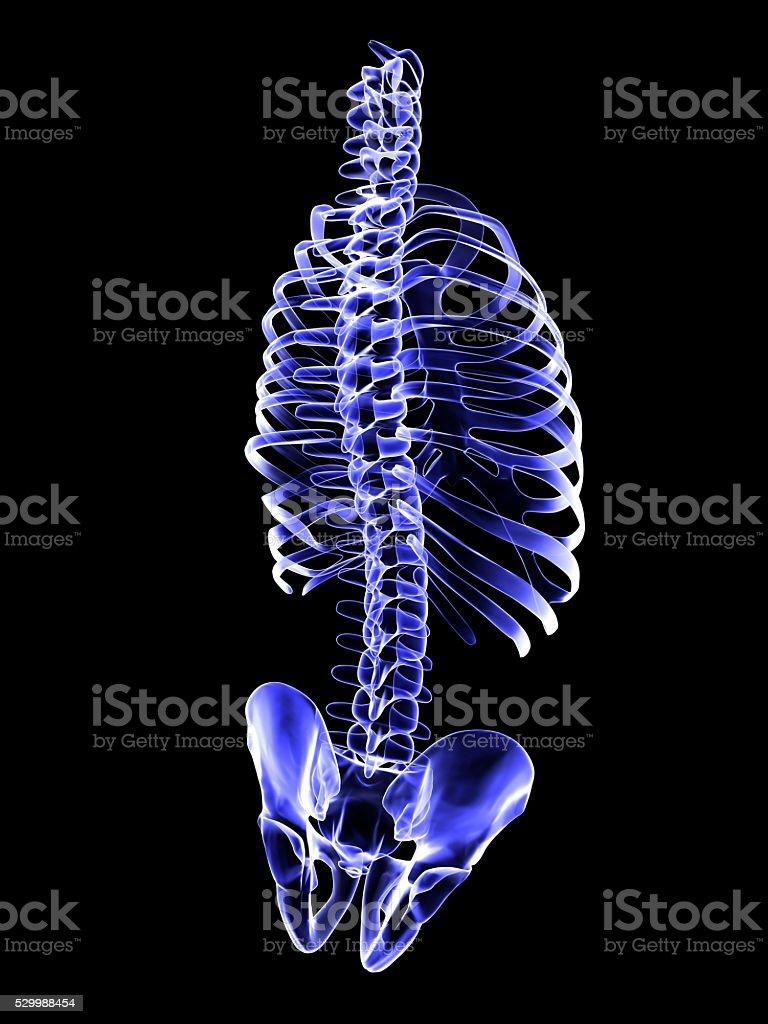 X-Ray Human Spine Screen stock photo