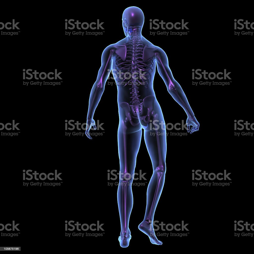 X-ray illustration of male human body and skeleton standing. royalty-free stock photo