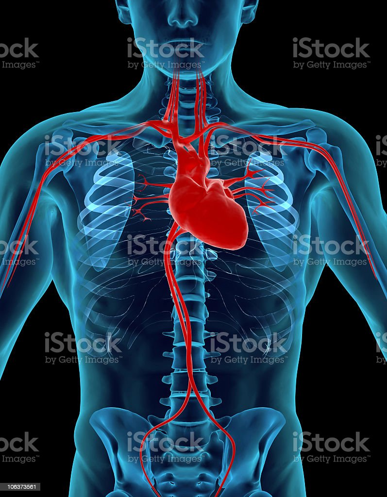 X-ray of human body focusing on the heart for medical study stock photo
