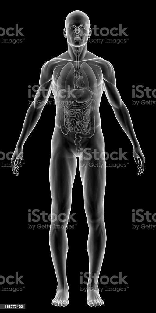 X-ray of human body with internal organs stock photo