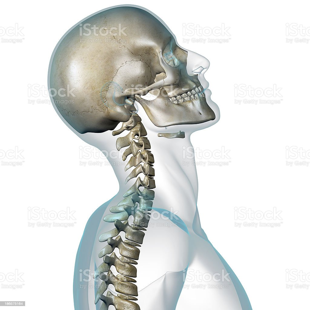 X-ray of human head showing neck contortion royalty-free stock photo