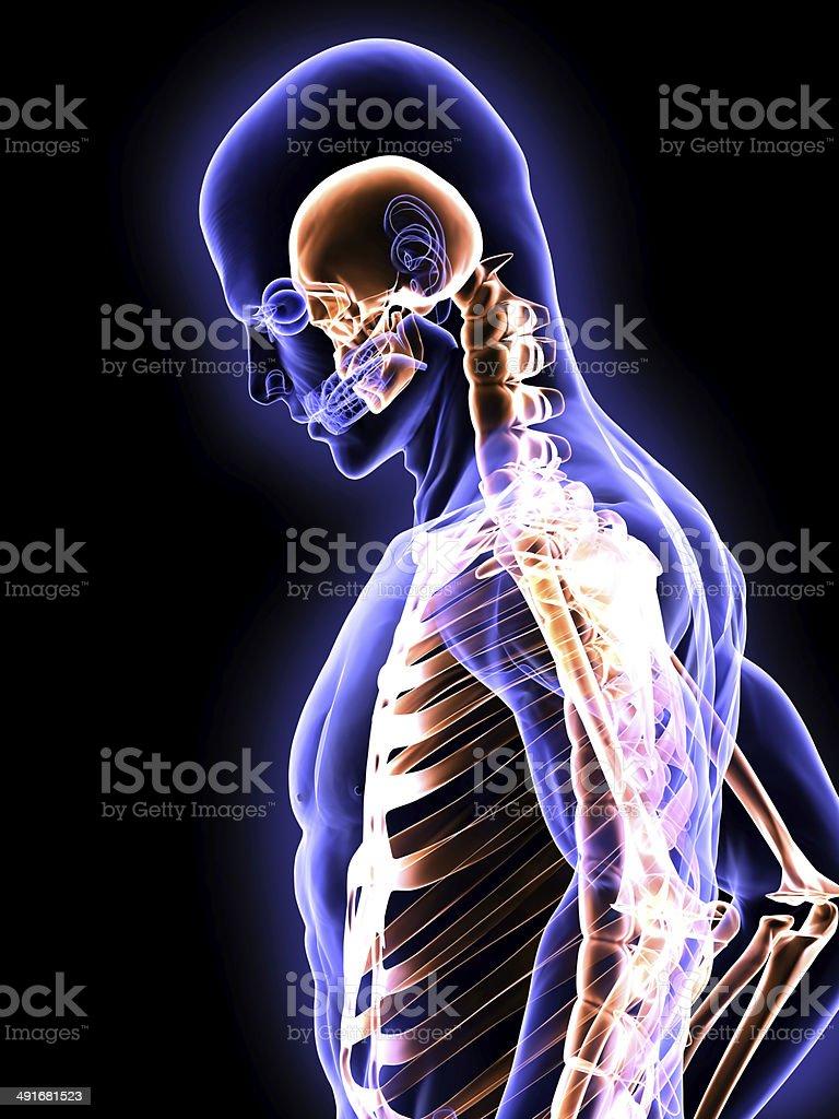 X-Ray Small Skull stock photo