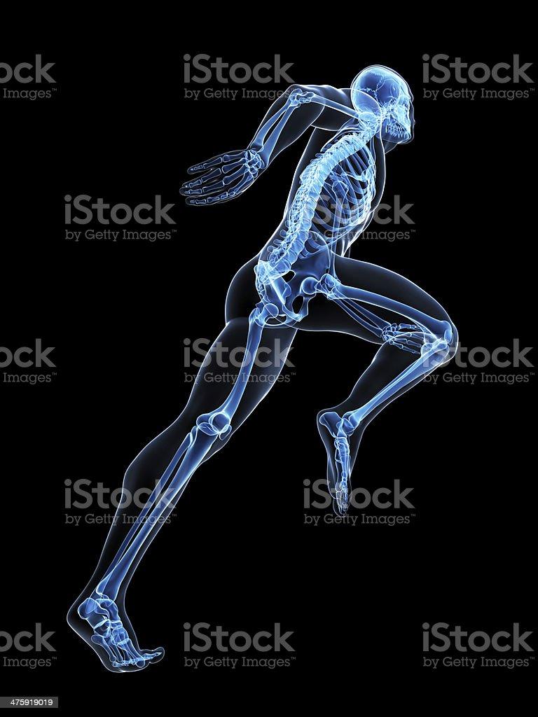 x-ray style runner stock photo