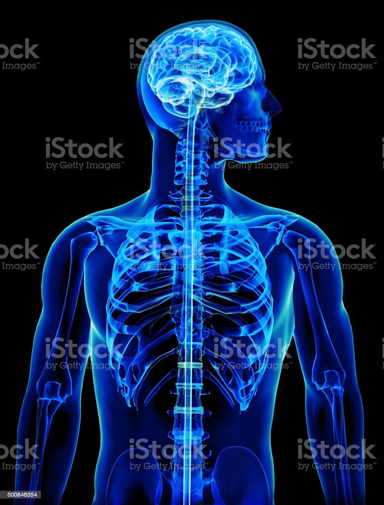 X-ray with brain and spinal cord concept stock photo
