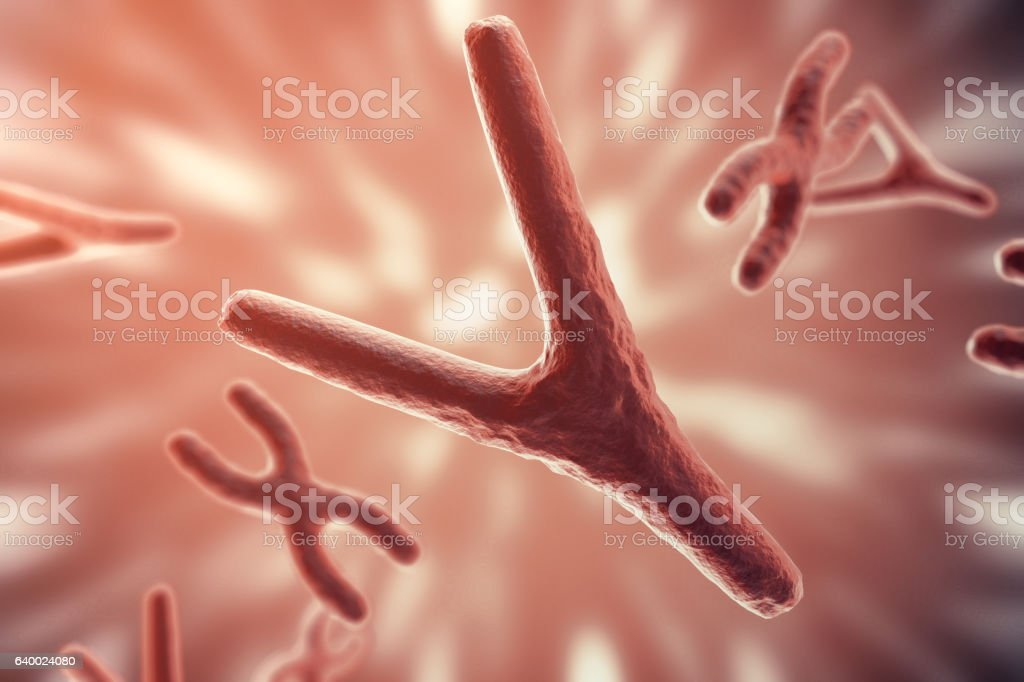 XY-chromosomes as a concept for human biology medical symbol stock photo