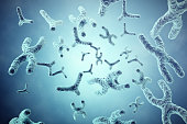XY-chromosomes on grey background, scientific and biology concept with