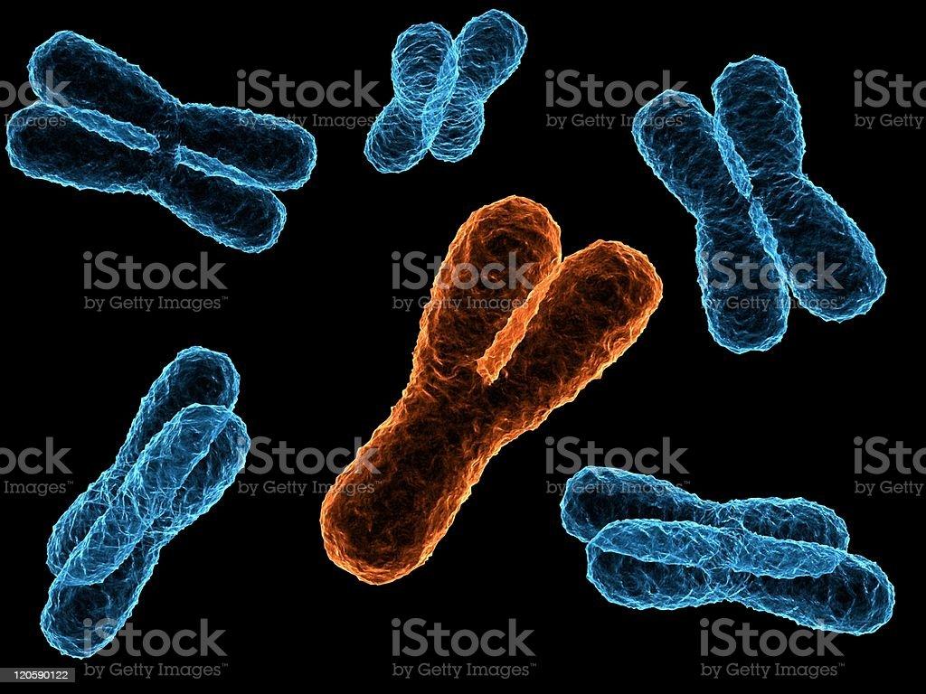 y chromosome stock photo