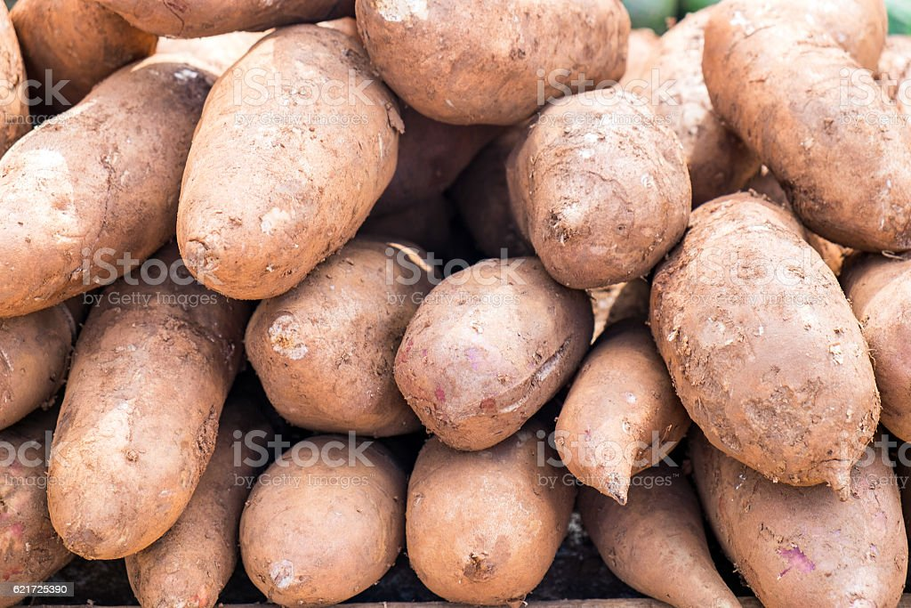 Yacon fruit herb healthy medicine stock photo