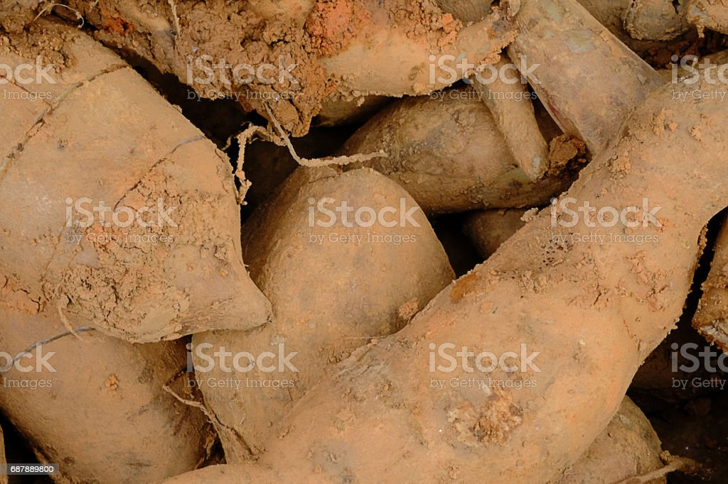 yacon root lay in basket. stock photo