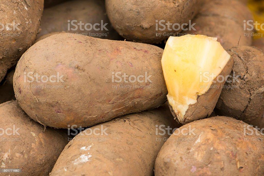 Yacon root stock photo