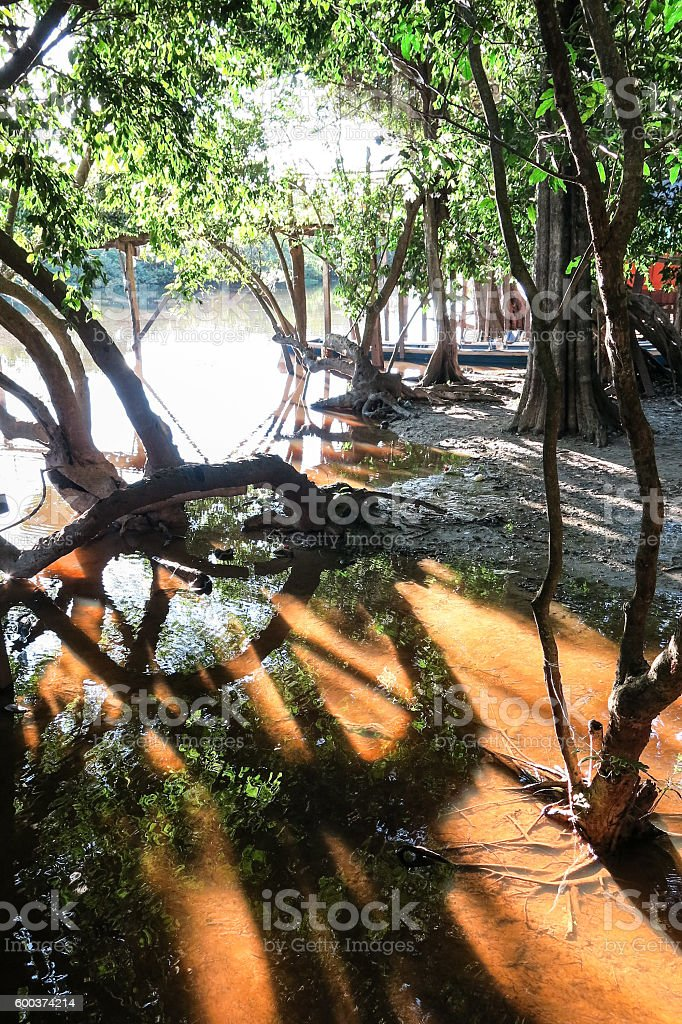 Yacuma river. Bolivian jungle. stock photo