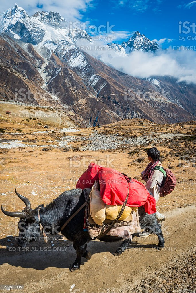 Yak Sherpa porter transporting expedition kit mountain trail Himalayas Nepal stock photo